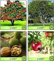 SEED(パケットあたり4)により、HOMESEED聖なる&ティンバー&ナッツ種子&フルーツ種子種子SEEDコンボ種子アソカ、マホガニー、Wallnut、agranateコンボ:高い成長SEEDSだけでなくPLANTS