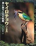 ヤイロチョウ—深い森でくらす妖精 (地球ふしぎはっけんシリーズ)