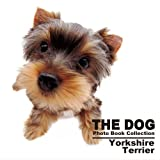 THE DOG Photo Book Collection Yorkshire Terrier (THE DOG Photo Book Collection)