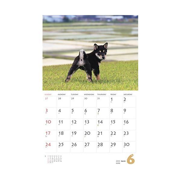 カレンダー2018 柴犬 (ヤマケイカレンダー...の紹介画像8