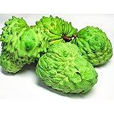 沖縄県産 アテモヤ 約2kg (4-12玉) あてもやは森のアイスクリームと言われ珍しいフルーツ (12月頃)