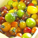 【予約7月中旬から発送】32種類の中から選ばれたカラフルミニトマト2kg