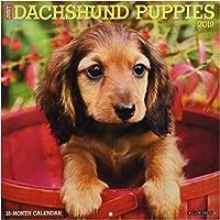 Just Dachshund Puppies 2019 Calendar
