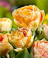 Virtue 50 pcs Tulip Bonsai Mixed Tulip Flower Plant Indoor Bonsai Plant Flowers, Plant for Home & Garden Easy to Grow: 8