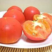 静岡産 高糖度トマト アメーラ 1kg