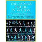 The Human Figure in Motion (Dover Anatomy for Artists)