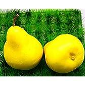 MeiPark 野菜と果物のサンプル おままごと(なし x1)