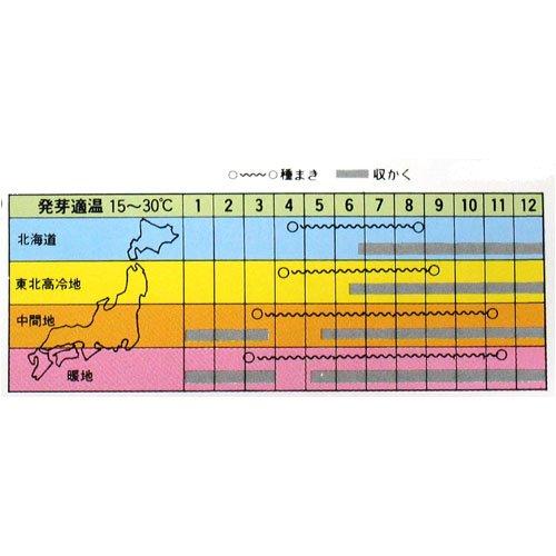 廿日大根 種 【食用ビート】 小袋(約40ml)