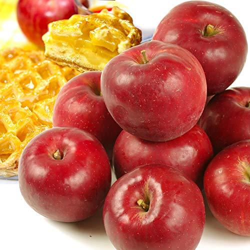 国華園 青森産 紅玉 5kg1箱 こうぎょく りんご