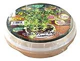 フォレスト お手軽栽培カップ 採ってもパクチー 種まきセット 栽培キット
