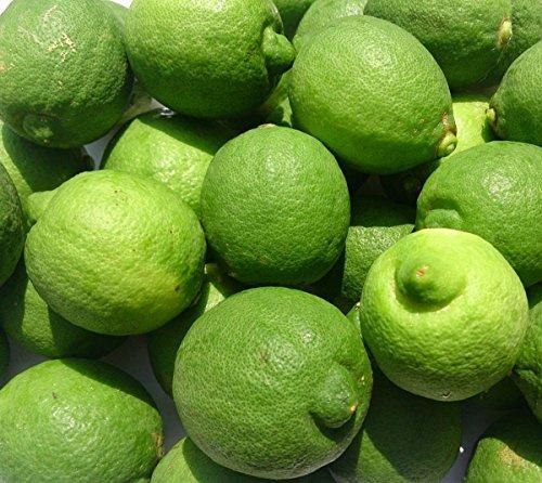 【無農薬・良品】国産(熊本県産)レモン1kg量り売り(味と香りの良いリスボン系) 有機肥料栽培・防腐剤・ワックス等不使用