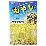 スプラウト 種 【 モヤシ ブラックマッペ 】 種子 小袋(約50ml)