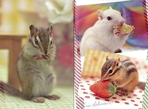 リス: 住まい、食べ物、接し方、病気のことがすぐわかる! (小動物 飼い方上手になれる!)