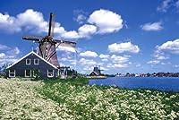 1000ピース ジグソーパズル めざせパズルの達人 花咲く風車の村-オランダ (50x75cm)