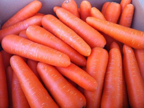 わけあり 洗いフルーツ人参 無農薬 10kg