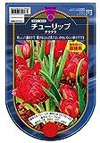 【BULB PLANT】Tulip humilis Tete a Tete 原種チューリップ・テータ・テート・ポット苗