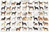 獣医教育WALLチャート図はライセンスを受け犬の品種ポスター(61x91cm) [並行輸入品]