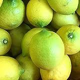 広島県産 瀬戸内レモン 1kg ( 傷なし ) / ノーワックス ・ 防腐剤不使用 産地直送