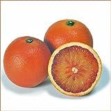 柑橘類の苗木 ブラッドオレンジ(タロッコオレンジ)
