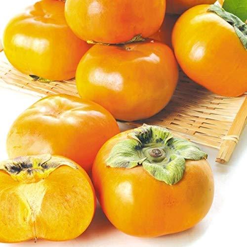 国華園 三重・愛知産 次郎柿 約10kg1箱 ご家庭用 柿