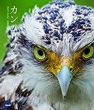 カンムリワシ—守るべきもの、石垣島の白い天使