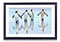 キングペンギンはビーチ、海の上を歩い - 木製の黒額縁装飾画 壁画 写真ポスター 壁の芸術 (60cmx40cm)