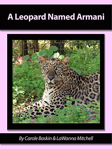 A Leopard Named Armani Meet The Cats Book 2 English Edition