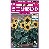 [サカタ 花タネ]ひまわり:ミニひまわり ジュニア(矮性種) の種 3袋セット ノーブランド品