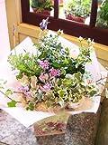 Amazon.co.jp【パリスタイルの花屋】バラとラベンダーの寄鉢【開店祝い・誕生日・新築祝い・母の日 各種お祝い・記念日に】