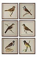 ばねSoldiers鳥印刷、S / 6