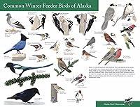 アラスカの一般的な冬のフィーダーの鳥 Common winter feeder brids of Alaska silk fabric poster シルクファブリックポスター 110cm x 80cm