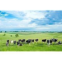 夏の畑の牛動物 - #43856 - キャンバス印刷アートポスター 写真 部屋インテリア絵画 ポスター 90cmx60cm