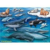 海の哺乳類 A3サイズ 720ピース ミュージアム ジグソーパズル