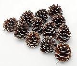 松ぼっくり クリスマスツリー 飾り 松ぼっくり 掛ける用糸付け 雪のような塗装 12個セット