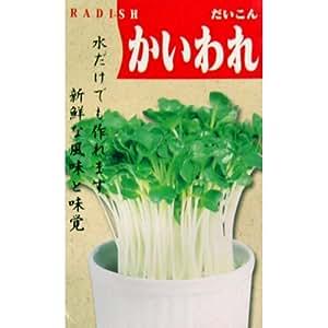 スプラウト 種 【 大根 かいわれ 】 種子 小袋(約40ml)
