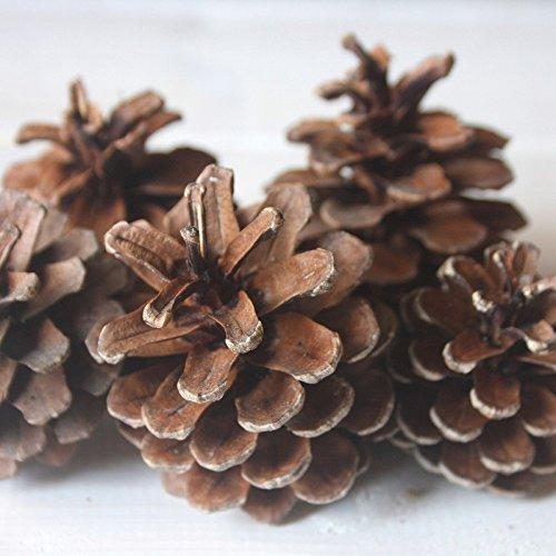 松ぼっくり(木の実)50個 自然素材 国内産