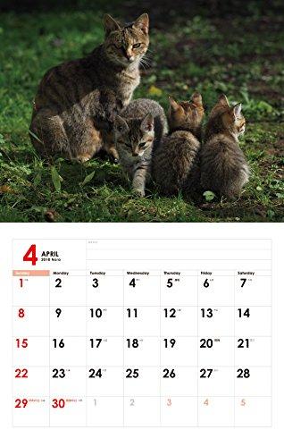 2018猫カレンダー のら ([カレンダー])