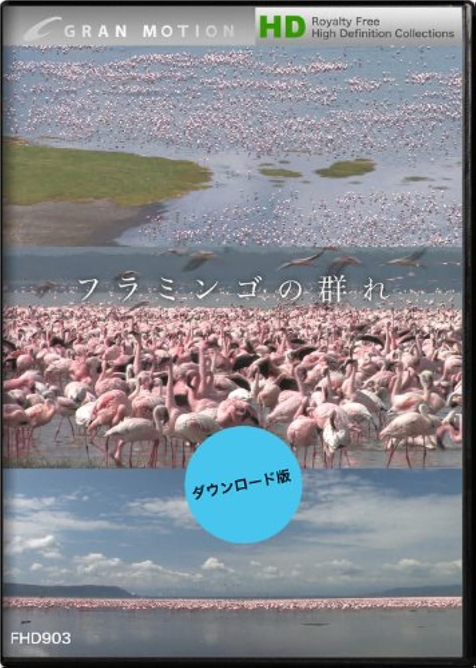 従順な単なる残酷なグランモーション FHD903 フラミンゴの群れ / フラミンゴの群れ [ダウンロード]