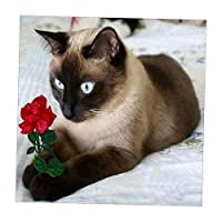 chiwanji 5D DIY ダイヤモンド 刺繍 クロス 装飾的 芸術的 装飾 顔料付き 多スタイル選べ  - ペルシャ猫