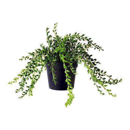 RoomClip商品情報 - IKEA(イケア) FEJKA 60214927 人工観葉植物, Succulent