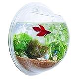 インテリア アクアリウム 壁掛け水槽 観葉植物 金魚鉢 テラリウム カラー 小石 留め具付き