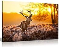 Red Deer in Morning Sunキャンバス壁アート画像印刷 A1 76x51 cm (30x20in) 0615517258211
