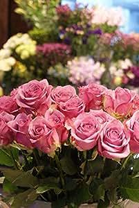 箱買い 一級品のバラ(紫系) 誕生日・記念日・卒業・送別・各種お祝い