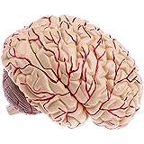 Homyl 人間脳 モデル 実物大 医学教育 専門的 学校教材用 外科医学用 解剖学 神経学 1:1 3D印刷 9の部品