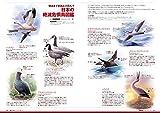 BIRDER(バーダー)2019年7月号 絶滅の危機に立たされた鳥たち【巻末付録 イラスト入り「まいにち野鳥」カレンダー 2019 下半期(7〜12月)付き】 画像