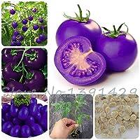 紫色のトマト種子野菜種子100ピース梱包農場植物簡単に育てる新しい