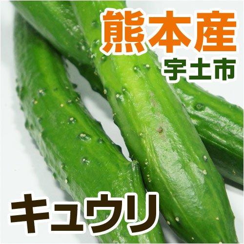 あいあい 熊本県産 キュウリ (熊本宇土産) 3?4本 【野菜セット同梱で】【九州 野菜】【きゅうり】【胡瓜】