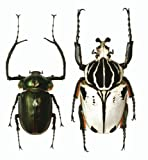 昆虫の雑学事典 画像