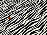 50cm単位 生地 布 綿 ツイル アニマル毛皮模様 [在庫共有品] (37A(ゼブラ柄)) [並行輸入品]