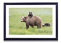 レイク・クラーク国立公園、アラスカ、クマ、草原 - 木製の黒額縁装飾画壁画 写真ポスター 壁の芸術 (50cmx35cm)
